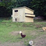 Chicken Shed - Poultry Housing - The Wooden Workshop Bampton Devon